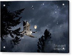 Midnight Flight Acrylic Print