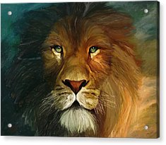 Lion Portrait Acrylic Print by James Shepherd