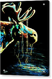 Midnight Moose Drool  Acrylic Print