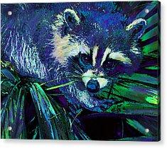 Midnight Racoon Acrylic Print by Jane Schnetlage
