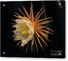 Midnight Vision Acrylic Print by Dodie Ulery