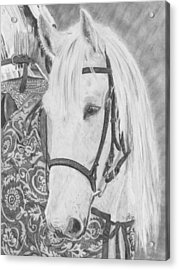 Acrylic Print featuring the drawing Midsummer Knight Majesty by Gigi Dequanne
