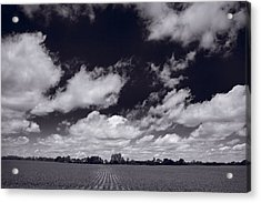 Midwest Corn Field Bw Acrylic Print by Steve Gadomski