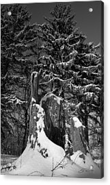 Acrylic Print featuring the photograph Midwest Sequoia by Ed Cilley