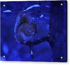 Midwinter Snack Acrylic Print