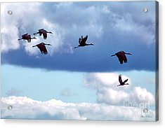 Acrylic Print featuring the photograph Migration by Adam Olsen