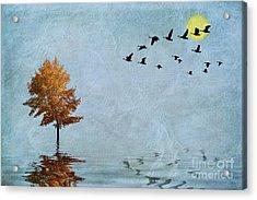 Migration Acrylic Print by John Edwards