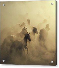 Migration Of Horses Acrylic Print