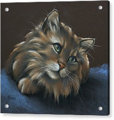 Acrylic Print featuring the drawing Miko by Cynthia House