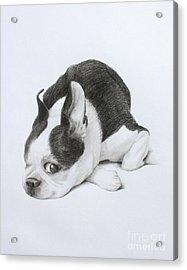 Miles Acrylic Print by Denise M Cassano