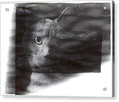 Miles Acrylic Print