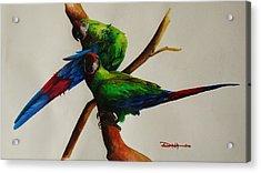 Military Macaws Acrylic Print by Dana Newman