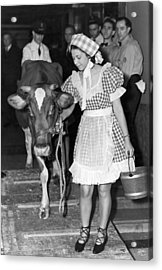 Milking Cow In New York Hotel Acrylic Print by Underwood Archives