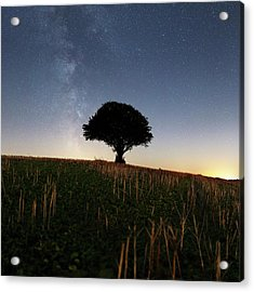 Milky Way Over Tree Acrylic Print by Laurent Laveder