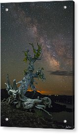 Milky Way Tree Acrylic Print by Abe Blair