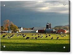 Miller Farm Acrylic Print by Paul Miller