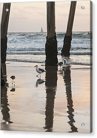 Acrylic Print featuring the photograph Milling About by Kevin Bergen