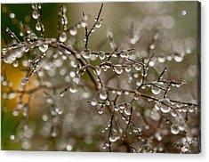Million Droplets Acrylic Print
