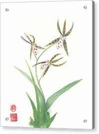 Miltonia Orchid Acrylic Print