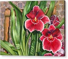 Miltonia Orchids Acrylic Print