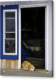 Acrylic Print featuring the photograph Minding The Store by Gary Neiss