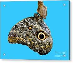 Mindo Butterfly Acrylic Print by Al Bourassa