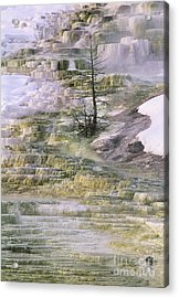 Acrylic Print featuring the photograph Minerva Springs Terraces Yellowstone National Park by Dave Welling