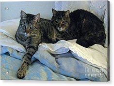 Ming And Sheba Resting  Acrylic Print