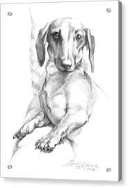 Mini Dachshund Sitting In A Chair Acrylic Print