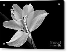 Mini Glad  2012 Acrylic Print by Art Barker