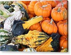 Acrylic Print featuring the photograph Mini Pumpkins And Gourds by Cynthia Guinn