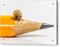 Acrylic Print featuring the photograph Mini Snail. by Gary Gillette
