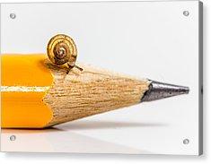 Mini Snail. Acrylic Print