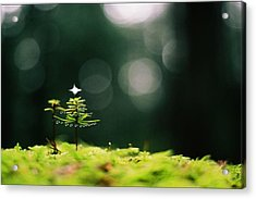 Miniature Christmas Tree Acrylic Print by Cathie Douglas