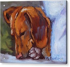 Miniature Dachshund Dog - Doxin Acrylic Print