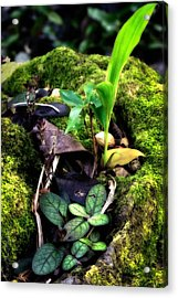 Acrylic Print featuring the photograph Miniature Garden by Jim Thompson