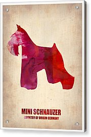 Miniature Schnauzer Poster Acrylic Print