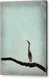 Minimalist Vintage Inspired Green Heron On Pale Blue Sky Acrylic Print