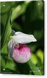 Minnesota's Wild Flower Acrylic Print