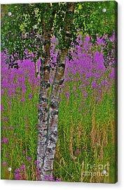 Miracles Happen They Do Trondelag - Norway Acrylic Print by  Andrzej Goszcz
