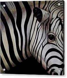 Mirada De Cebra I Acrylic Print by Thelma Zambrano