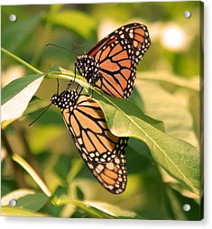 Acrylic Print featuring the photograph Mirror Image by Karen Silvestri