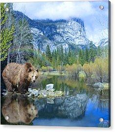 Mirror Lake Bear Acrylic Print by Alixandra Mullins