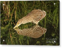 Mirror Mirror On The Wall Who Is The Fairest Heron Of All Acrylic Print by Heather King