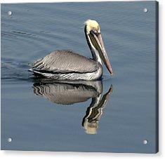 Mirror Pelican Acrylic Print