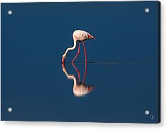 Mirrored Solitaire Acrylic Print by Jeppsson Photography
