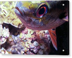Miscellaneous Fish 5 Acrylic Print by Dawn Eshelman