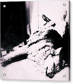 Miss Hannah.  #gsd #germanshepherd Acrylic Print