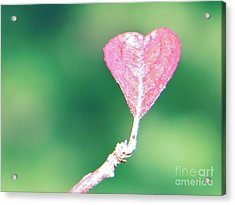 Miss Lonely Heart Acrylic Print