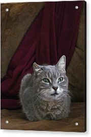 Miss Lucille Acrylic Print by Guy Ricketts